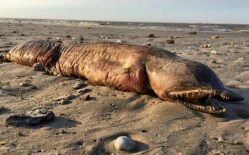 O creatură misterioasă și ciudată a apărut pe o plajă din Texas