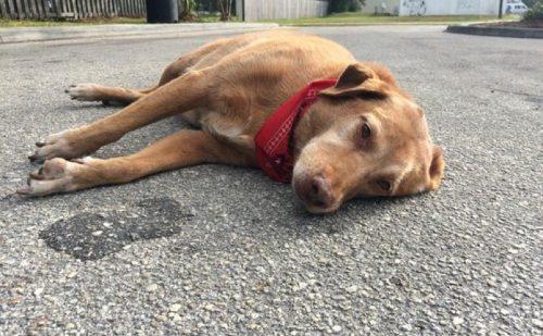 """Incident ȘOCANT relatat pe o rețea de socializare: """"un individ mi-a călcat câinele cu maşină… pentru că aşa a vrut el"""""""