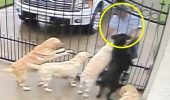 Camera de supraveghere a surprins ceea ce făcea poștașul câinilor săi! Clipul se răspândește iute ca focul pe INTERNET I VIDEO