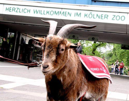 SUMĂ FABULOASĂ, moștenire pentru Grădina Zoologică din Köln