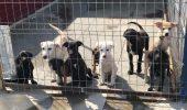 O cunoscută vedetă TV a pus în pericol viața celor 600 de animale aflate în adăpostul Kola Kariola