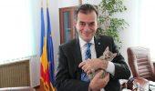 Ludovic Orban a găsit o pisică ABANDONATĂ pe stradă. Uite ce a DECIS să facă cu ea