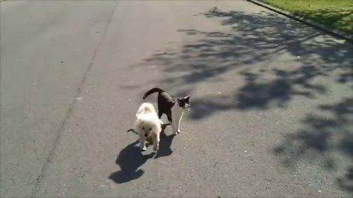 Dușmanul a DEVENIT însoțitor. Ce a putut să i se întâmple unui câine cu DEFICIENȚE DE VEDERE! VIDEO