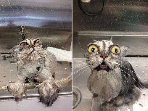 Cum a supravieţuit un pisoi în mașina de spălat rufe, la 60 de grade!