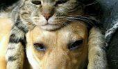 Unde-i lege, nu-i tocmeală! Cum ÎNCURAJEAZĂ STATUL AMERICAN ADOPȚIA animalelor din centrele de adăpost!