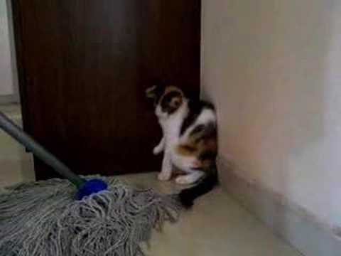 Mopul, DUȘMANUL de temut al felinelor I VIDEO AMUZANT