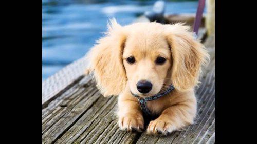 """Deparazitarea interna la PUIUL DE CÂINE corect, eficient şi fără riscuri! """"Când achiziţionăm un puiuţ de câine…!"""