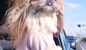 O cățelușă a făcut FURORI PE INTERNET cu coafurile ei I FOTO