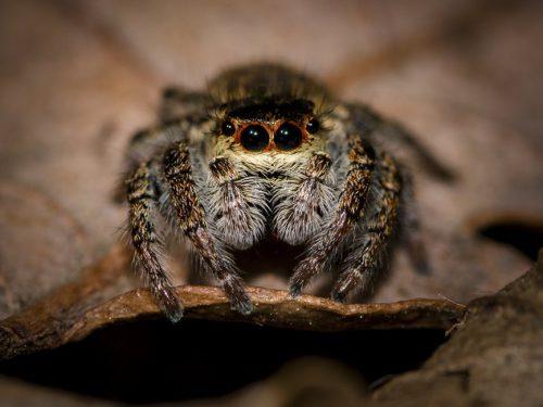 Detaliul care vă va schimba percepția asupra păianjenilor