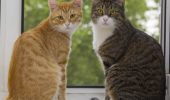 Reguli stricte pentru iubitorii de animale, cu dedicație de la primarul Buzăului. Nu aveți voie mai mult de două pisici!