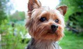 Fosta iubită a lui Columbeanu a decis să-și dea câinele spre adopție. Uite ce a determinat-o să facă acest lucru