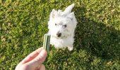 Anumite recompense pentru câini, PERICULOASE pentru sănătatea campionilor noștrii? Uite ce spun specialiștii