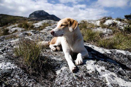 IMPRESIONANT! Ginger, un câine de securitate, a IMPRESIONAT o lume întreagă. Cum a devenit un CĂLĂTOR MONDIAL / GALERIE FOTO
