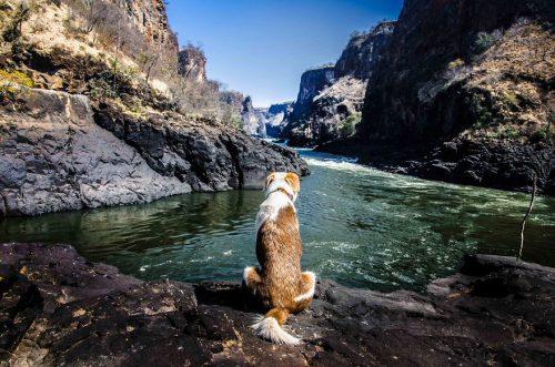 Ginger, un câine de securitate, a IMPRESIONAT o lume întreagă. Cum a devenit un CĂLĂTOR MONDIAL / GALERIE FOTO