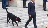 Președintele Macron a fost făcut de râs în public. Momente hilare la Palatul Elysée. Cine este autorul? -Video-