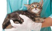 ȘOCANT! Boală FATALĂ pentru pisici