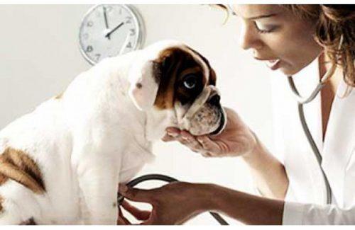 Giardioza, o problema la animale si la om. De ce trebuie să cunoști această boală