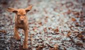 Dogs Puppy Leaves Fall Wet Funny Autumn Canine Rain Ears Animals Cute Humor Baby Doing Things