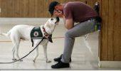 Cum comunică câinii cu stăpânii lor? Explicația care a uimit mii de oameni