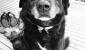 """Adevărul din spatele unei asociații pentru protecția animalelor: """"La început iubeam câinii și voiam să schimb lumea. Acum sunt de piatră, nu mai simt nimic"""""""