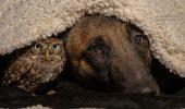 """Prietenia dintre o bufniță și un câine, o LECȚIE de viață: """"Iubesc FRUMUSEȚEA, PUTEREA, LOIALITATEA și CURAJUL animalelor""""!"""