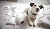 Un OBICEI DISTRACTIV al câinilor le scurtează viața. Puțin știu care este marele pericol