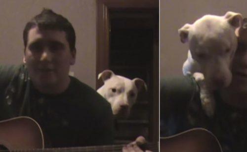 ADORABIL! Ce face un Pit Bull când stăpânul îi cântă o serenadă / VIDEO