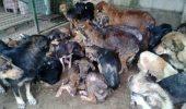 Împreună putem SALVA! Primarul oneștiului a luat o DECIZIE ULUITOARE în cazul câinilor fără stăpân