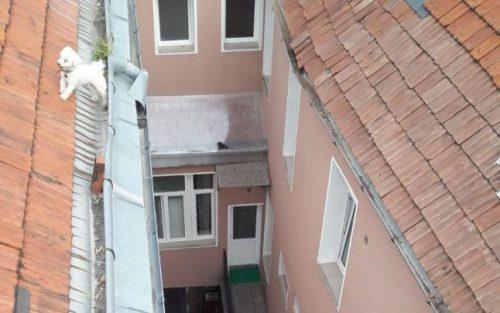Cum a fost salvat un căţel după ce a ajuns pe acoperişul unei case