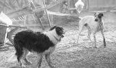 Tu cum ai ajuns să ADOPȚI un animal? Te-ai informat înainte sau a fost o decizie luată pe moment?