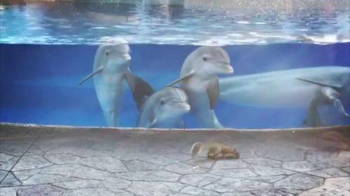 Delfini FASCINAȚI de două veverițe! Vezi CLIPUL care a strans milioane de vizualizari!