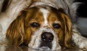 Uite ce probleme MAJORE de piele pot avea câinii atunci când sunt HRĂNIȚI cu pui