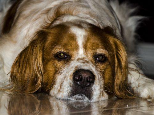 Uite ce probleme MAJORE de piele pot avea câinii atunci când sunt HRĂNIȚI cu carne de pui