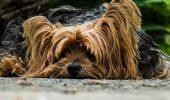 Vizitele la FRIZER sunt TRAUMATIZANTE pentru câinele tău? Uite câteva metodele care ferește câinele de stres
