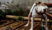 ANIMALE UCISE pentru plăceri bolnave şi munţi de bani! / IMAGINILE VĂ POT AFECTA EMOŢIONAL