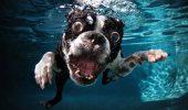 Un specialist enumeră ȘASE OBICEIURI CIUDATE alte câinilor! Motivele sunt CLARE