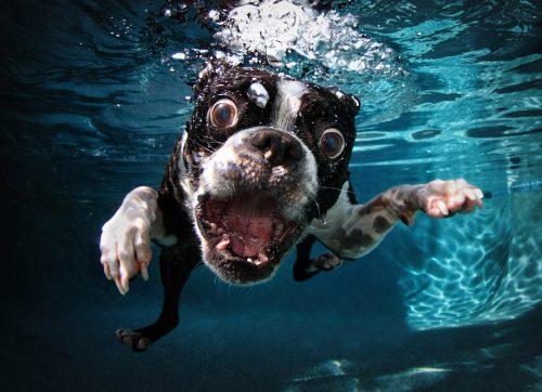 Un specialist enumeră 6 OBICEIURI CIUDATE alte câinilor! Motivele sunt CLARE