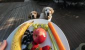 Cât de necesare sunt FRUCTELE și LEGUMELE în dieta câinelui tău