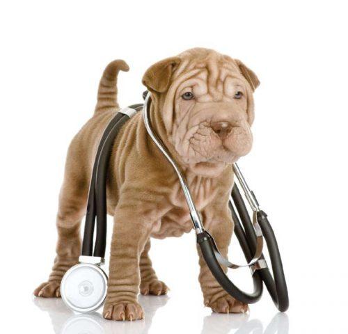 Pacientul MODEL pentru cabinetul veterinar / VIDEO