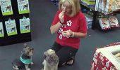 EXPERIMENT: AI MÂNCA HRANĂ pentru câini? Ai face și tu la fel ca ea?