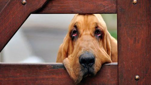 Toți iubitorii de animale trebuie să știe asta! Ce secrete ascunde EPILEPSIA la căței