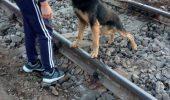 Încă un CAZ DE CRUZIME îngrozește opinia publică din Romania. Află MOTIVUL HALUCINANT pentru care un bătrân și-a legat câinele de calea ferată!