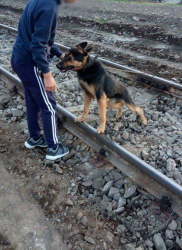 Înca un CAZ DE CRUZIME îngrozește opinia publică din Romania. Află MOTIVUL HALUCINANT pentru care un bătrân și-a legat câinele de calea ferată!