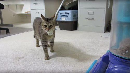 INVENȚIA TRĂSNITĂ a unui bărbat! Și-a dresat pisica să vâneze, pentru a se hrăni singură. Acum toți îl vor copia – VIDEO