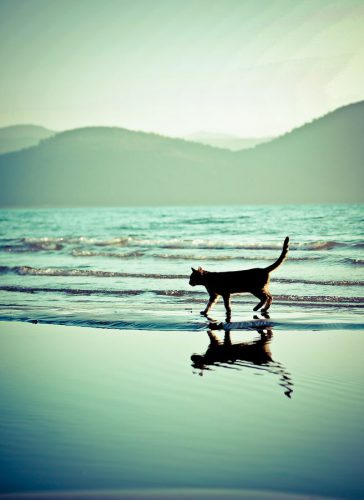 VIDEO INEDIT! O PISICĂ demontează mitul că nu-i place apa