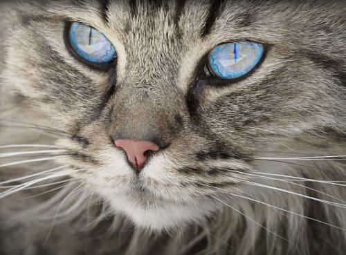 MUSTĂȚILE PISICII servesc un scop anume sau se află pur și simplu pe fața felinelor?