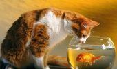 Paradisul pisicilor, țara unde FELINELE nu sunt nevoite să ceară mâncare