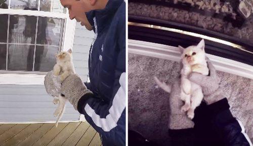 Un pisoi a fost găsit paralizat de frig şi aproape mort…. Vezi cum l-au readus la viață