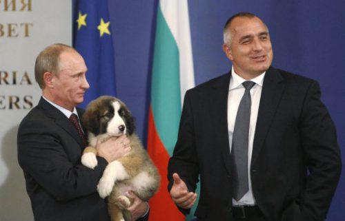 CADOU pentru Putin. Ruşii pot alege numele noului cățel