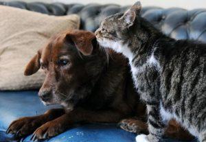 Te-ai fi gândit vreodată că un cățel orb poate fi îngrijit de o pisică? | VIDEO